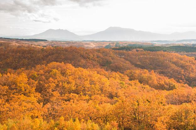 写真: 恋人たちの丘から秋景色♪