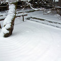 光明禅寺前庭の雪景色♪