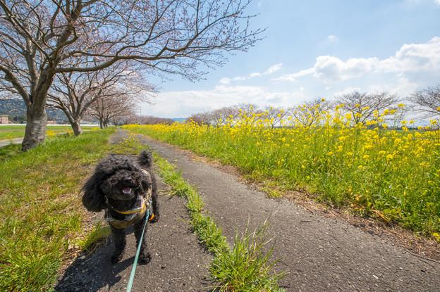 草場川の散歩道♪