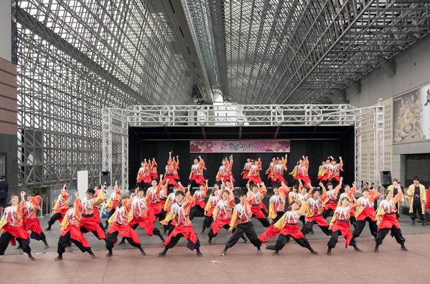 京都さくらよさこい2016 和歌山大学よさこいサークル「和歌乱」