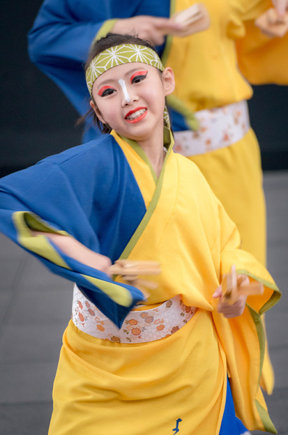京都さくらよさこい2016よさこい踊り「さい」