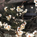 写真: 里の春