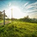写真: 青青草原