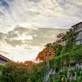 写真: 台北-寶藏巖落日