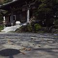 写真: 枯れ葉舞う妙法寺