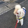 写真: モフ太散歩