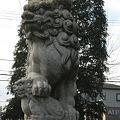 Photos: 狛犬吽