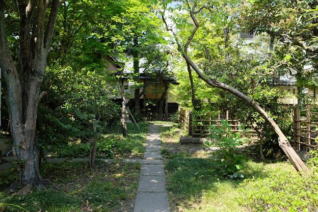 物外軒の緑あふれる庭