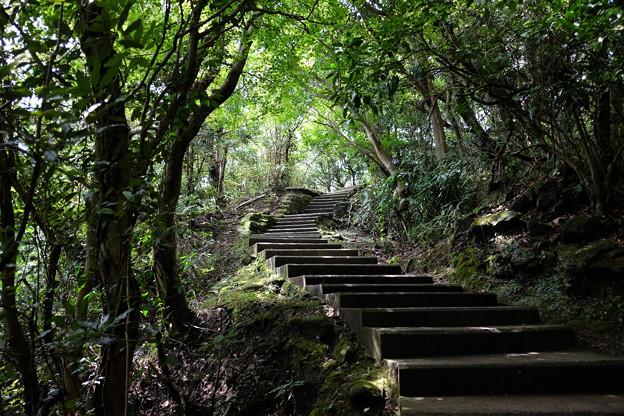 緑あふれる日本寺