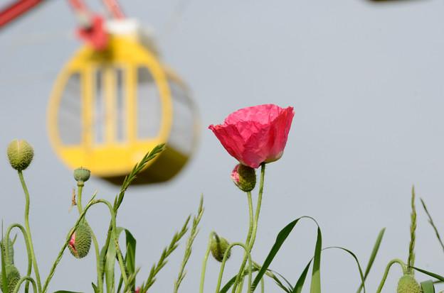 [3]「観覧車のある公園・春」(葛西臨海公園)