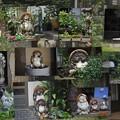 Photos: 狸さん