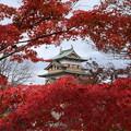 写真: 紅葉の高島城