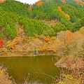晩秋の宮ヶ瀬湖