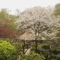 Photos: 薬師池公園(2)