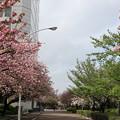 東京流通センター 桜並木(2)
