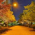 東京流通センター  夜桜