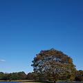 写真: 昭和記念公園・水鳥の池