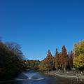写真: 井の頭公園・紅葉01