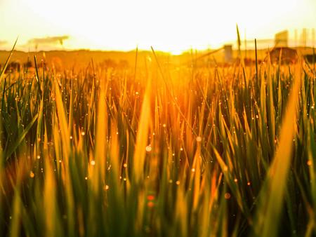 Photos: 輝く大地 ~Prayer for golden harvest~