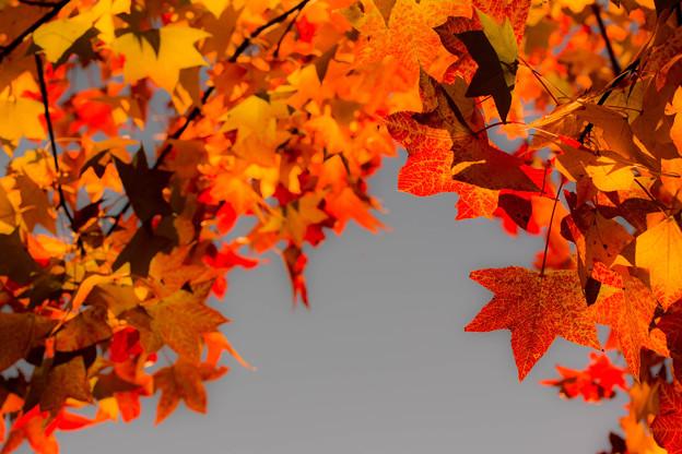彩りの秋星たち  ~Colored leaves