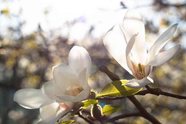 花開く  ~Beginning of spring~