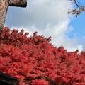 写真: 27.11.10双観山の紅葉