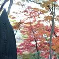 写真: 27.11.10萬多奈能岡の紅葉