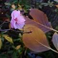 写真: 咲き初めの梅と散り初めの落ち葉
