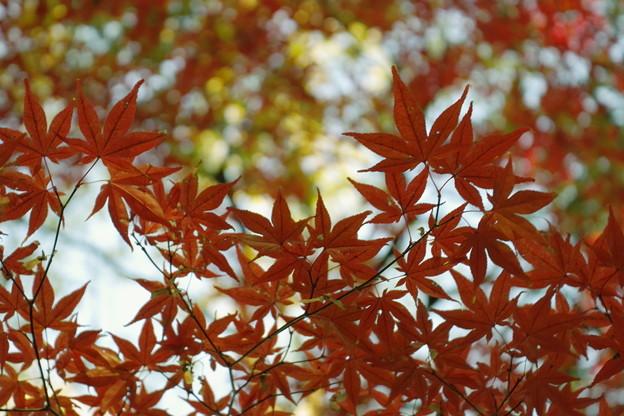 097SD14_2141 清澄庭園の紅葉