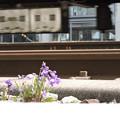 Photos: 線路とスミレ