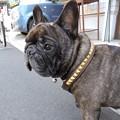 Photos: 看板犬