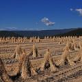 写真: 田んぼは冬支度