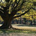 Photos: この木、何の木、
