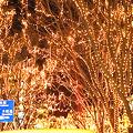写真: 仙台 光のページェント