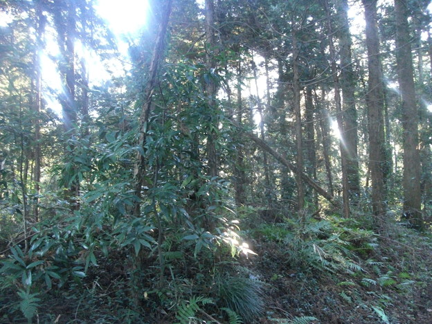 平賀の森林3