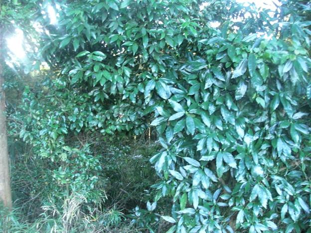 平賀の森林8