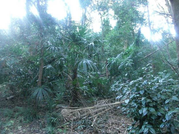 平賀の森林11
