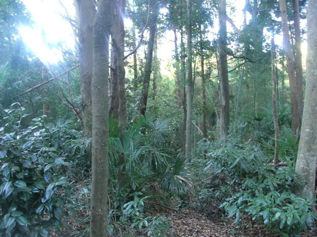 平賀の森林12