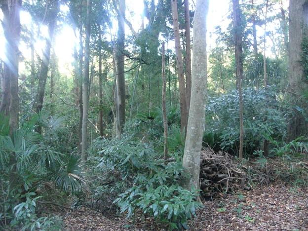 平賀の森林13