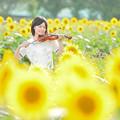 Photos: ヒマワリの奏者