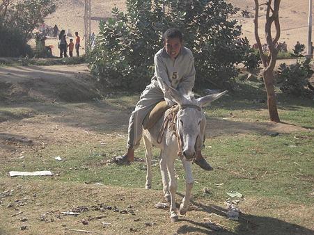 アスワーン西岸でロバに乗る子供