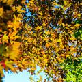 Photos: 秋の気配