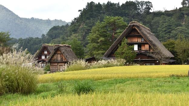 Photos: 稲穂と集落