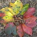 柿の葉グラデーション