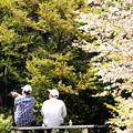 Photos: 同期の桜