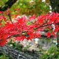 ハチ高原の紅葉2