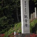 Photos: 奥松島・彼岸花 06
