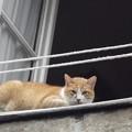 写真: オビドスのネコ0120