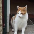 写真: オビドスのネコ0122