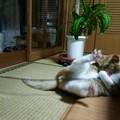Photos: チグラーシャ0122